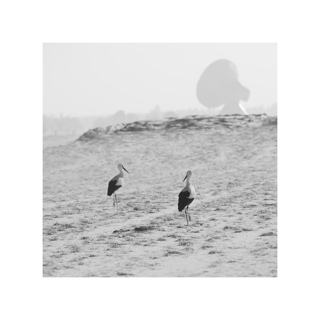 050734-Storche-klein.jpg
